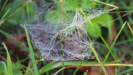 remède araignée naturel