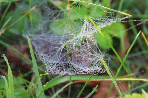 Remède anti-Araignée naturel
